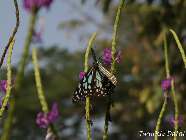 Wildlife Photography, Butterfly Garden