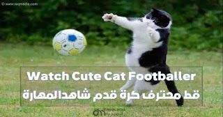 قط محترف كرة قدم شاهد المهارة