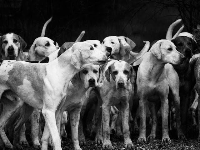 Нарушение выгула собак