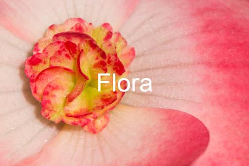 Flora Gallery