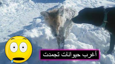 أغرب 6 حيوانات تجمدت من شدة البرد ! لن تصدق كيف تغير شكلها