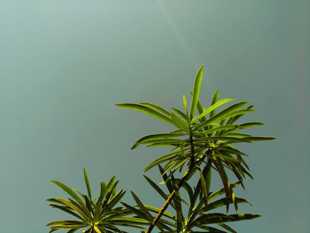 Low Angle Shot of Green Leaf Plant Under Gray Sky HD Copyright Free Image