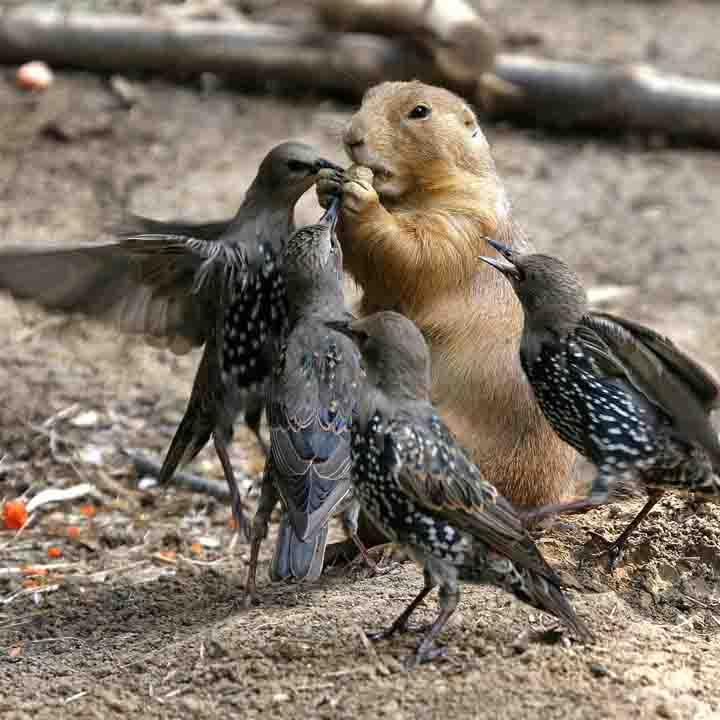 sincap kuş resimleri
