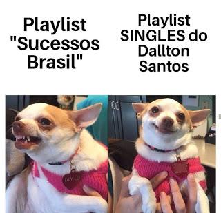 guitar memes, cachorro,cão, meme, guitarristas do brasil