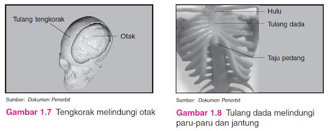fungsi tengkorak