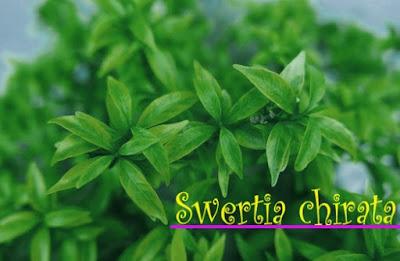 Swertia Chirata
