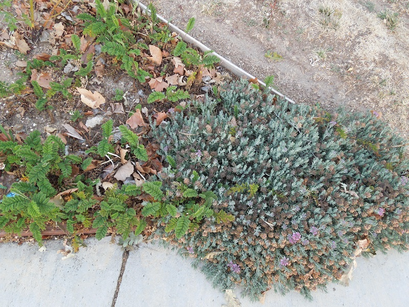 Paso Robles in Photos: My Experience Growing Tansy