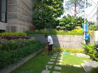Jasa Tukang Taman Tropis Surabaya tianggadha art