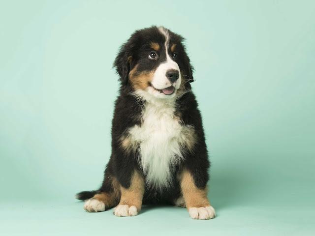 Tully's Training - Online Dog Training