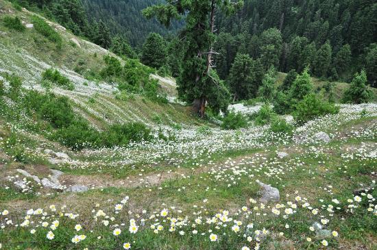 Bara Pathar Dalhousie flower valley