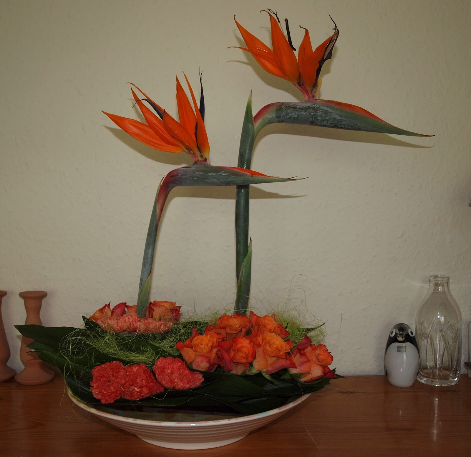 Natural History Creation And Religious Conflicts Bird Of Paradise Flowers