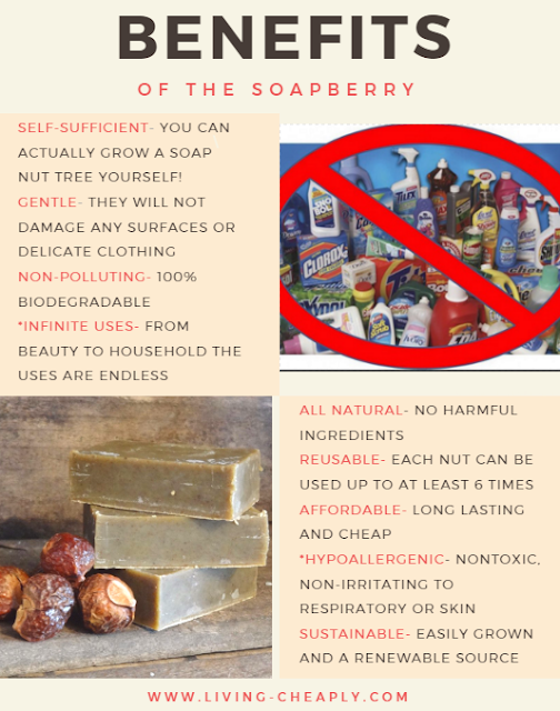 Soapberry-Benefits