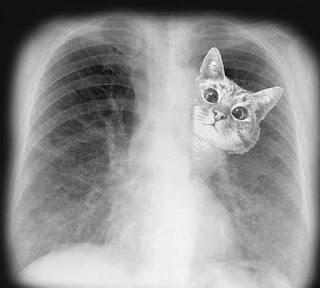 La muerte de un gato