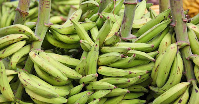 Get Free Plantain Business Plan