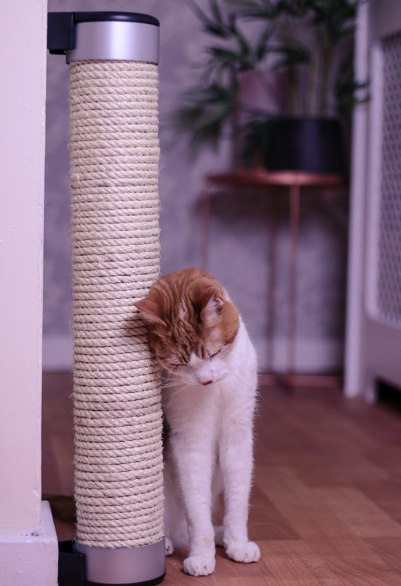 Photo of a ginger and white cat rubbing against the Catipilla Cat scratcher