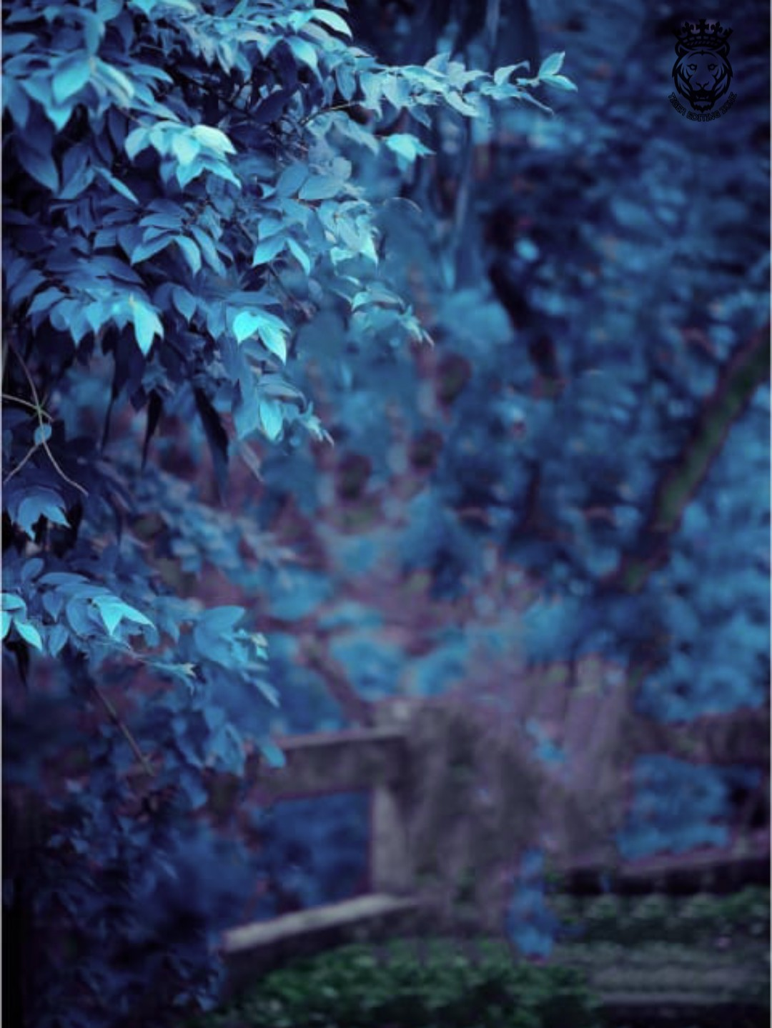 200+ Moody Blue Photo Editing Background Images | Blue Backgrounds HD for Editing