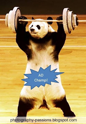 http://photography-passions.blogspot.com - The Heavyweight Google Panda!!