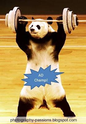 http://photography-passions.blogspot.com - The Heavyweight Google Panda!!
