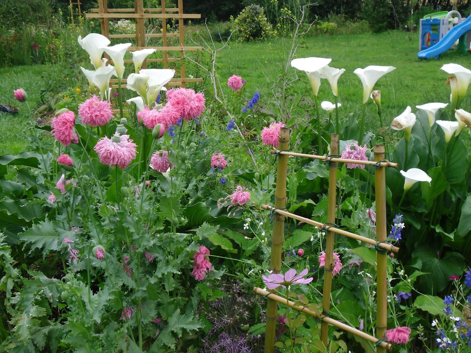 Le Jardin Des Lutins Juin 2012