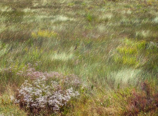 vegetation ile d aix charente maritime