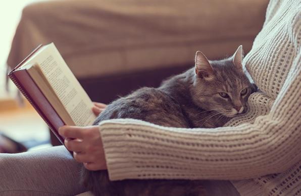 Hanno i gatti ansia da separazione?