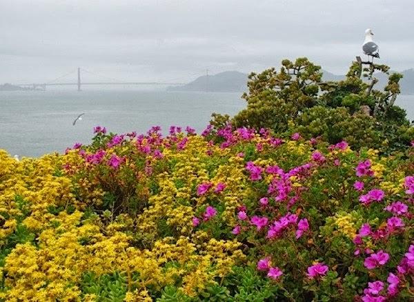 Vista del puente Golden Gate desde la isla