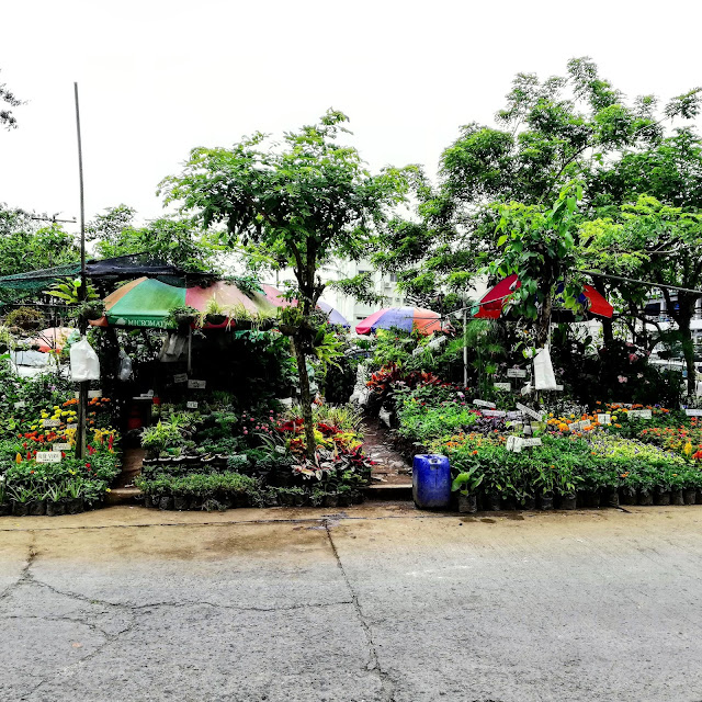 BUYING PLANTS AT MAHOGANY MARKET