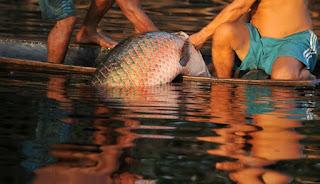 atividade de pescaria na amazona