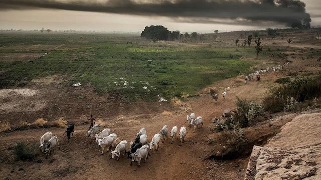 International cattle market, others shut down ahead of lockdown in Adamawa State