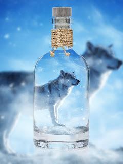 wolf wallpaper 4k  wolf wallpaper iphone