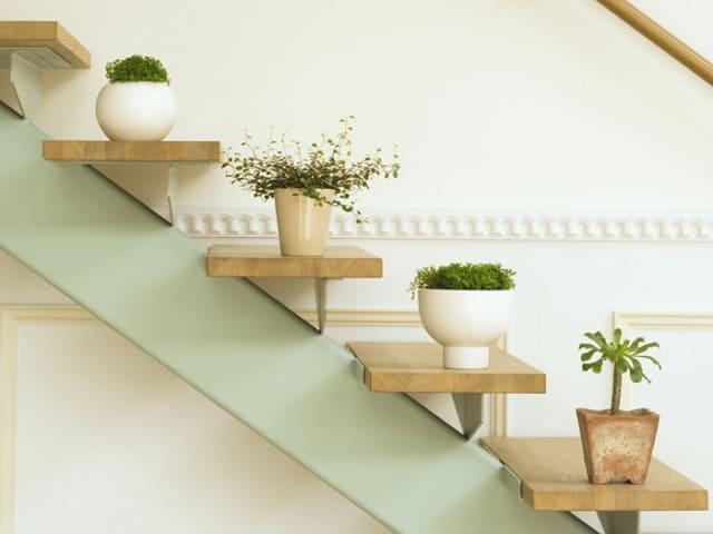 gambar tanaman hias di dinding