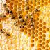 Tirulah Spirit dari Fakta Lebah dalam Islam untuk Resolusi 2020
