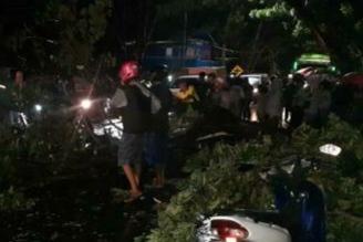 Hujan Disertai Angin Kencang, Pohon Besar Tumbang Di Jalan Yos Sudarso Bone