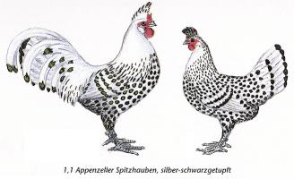 Breed Savers Appenzeller Spitzhauben