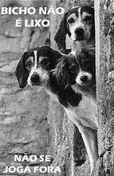 Resultado de imagem para imagens minutos de sabedoria não maltrate os animais