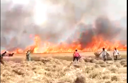 25 acres of the former Sarpanch of Dadasiya, the fire was damaged in the wheat grouse, the negligence of the power department