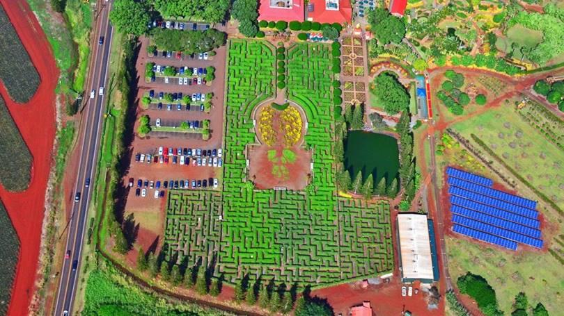 Pineapple Maze (Wahayawa, Hawaii)