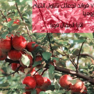 فوائد التفاح الاخضر, فوائد التفاح الاحمر, فوائد التفاح على الريق, فوائد التفاح للحامل, فوائد التفاح الاصفر, فوائد التفاح للقلب, فوائد التفاح للبطن, فوائد التفاح الاخضر على الريق, فوائد التفاح الاخضر للجنس, فوائد التفاح يوميا, فوائد شرب خل التفاح يوميا, فوائد التفاح واضراره, فوائد التفاح والخيار, فوائد التفاح والموز, فوائد التفاح والبرتقال, فوائد التفاح والحليب, فوائد التفاح والقرفة, فوائد التفاح والليمون, فوائد التفاح والعسل, وفوائد التفاح, www.فوائد خل التفاح, فوائد و اضرار التفاح, فوائد واضرار خل التفاح, أضرار وفوائد التفاح الأخضر, اهمية وفوائد التفاح, ماهي اضرار وفوائد التفاح, انواع وفوائد التفاح, فوائد خل التفاح, فوائد التفاح ما هي, ما هي فوائد التفاح, ما هي فوائد التفاح الاخضر, ما هي فوائد التفاح الاحمر, ما هي فوائد التفاح للحامل, ما هي فوائد التفاح على الريق, ما هي فوائد التفاح الاصفر, ما هي فوائد التفاح الخل, فوائد نواة التفاح, من فوائد التفاح, عن فوائد التفاح, فوائد التفاح مع العسل, فوائد التفاح مع القرفه, فوائد التفاح مع الماء, فوائد التفاح موضوع, فوائد التفاح مع الزبادي, فوائد التفاح مع الليمون, فوائد التفاح مع اللبن, فوائد التفاح مع الحليب, ما فوائد التفاح, ما فوائد التفاح الاخضر, ما فوائد التفاح الاحمر, ما فوائد التفاح للحامل, ما فوائد التفاح على الريق, ما فوائد التفاح الاصفر, ما فوائد التفاح الاخضر للحامل, ما فوائد التفاح الاخضر للرجيم, فوائد التفاح للشعر, فوائد التفاح للبشرة, فوائد التفاح للمعده, فوائد التفاح للرجيم, فوائد التفاح للقولون, فوائد التفاح كل يوم, فوائد التفاح كل صباح, فوائد كمبوت التفاح, فوائد خل التفاح كدهان للجسم, فوائد التفاح للاعب كمال الاجسام, فوائد خل التفاح كريم علي, فوائد اكل تفاحة كل يوم, فوائد التفاح قبل النوم, فوائد التفاح قبل التمرين, فوائد التفاح قبل الفطور, فوائد التفاح قبل النوم للتخسيس, فوائد التفاح قبل الاكل, فوائد قشر التفاح, فوائد قشر التفاح المغلي للكلى, فوائد قشر التفاح للوجه, فوائد التفاح الاخضر للحامل, فوائد التفاح في الصباح, فوائد التفاح في الرجيم, فوائد التفاح في الليل, فوائد التفاح في انقاص الوزن, فوائد التفاح فوائد التفاح, فوائد التفاح في الشهر التاسع, فوائد التفاح فيتامينات, فوائد التفاح فيديو, فوائد التفاح غني 