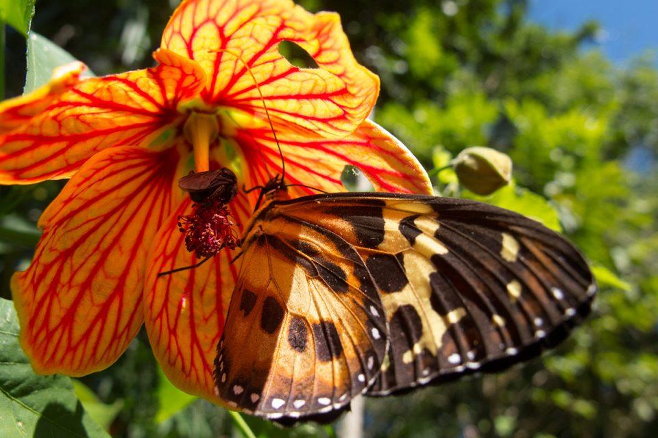 Бабочка в парке Игуасу в Аргентине