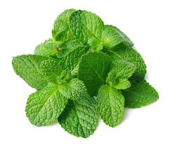 mint leaves(podina) health benefits in urdu