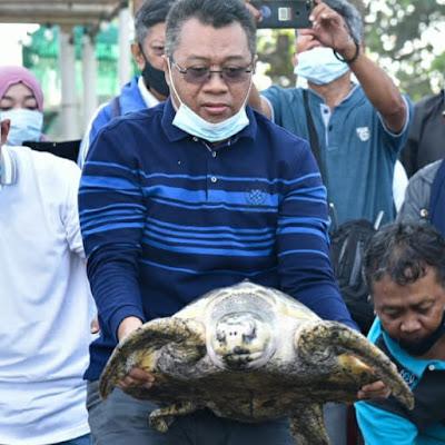 Gubernur NTB Lepas Penyu di Pantai Mapak