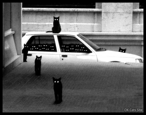 Photoshopped Cat picture • OMG, the black cat gang is back in is the city and your car