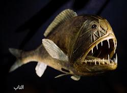 أغرب المخلوقات البحرية ، سمك الناب ، الناب البحري ، الناب