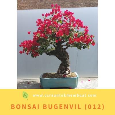 Bonsai Bugenvil (012)