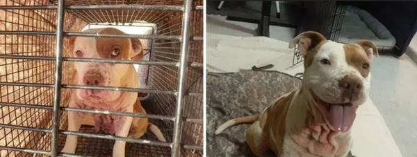Sự thay đổi kỳ diệu của những thú cưng vô gia cư sau khi được nhận nuôi