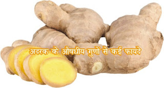 Ginger home remedies for health in hindi, स्वास्थ्य के लिए अदरक के बेमिसाल घरेलू नुस्खे in hindi, Miraculous benefits of ginger for health in hindi, सेहत के लिए अदरक के चमत्कारी फायदे in hindi, अदरक सेहत के लिए उत्तम है  in hindi, Ginger is good for health in hindi, अदरक के औषधीय गुणों से कई फायदे hindi, Medicinal properties of ginger have many benefits in hindi, adrak ke aushadhiya gun se kaee fayde in hindi, adrak in hindi, adrak ke barein mein in hindi, adrak ke fayde in hindi, adrak ka upyog in hindi, adrak ki photo in hindi, adrak jpg in  hindi, adrak ki jpeg in hindi, adrak pdf in hindi, adrak ke barein mein article in hindi, ginger in hindi, ginger ki photo, ginger ki jpeg in hindi, ginger image,ginger ke fayde in hindi, adrak image, ginger article in hindi, adrak in english, gud aur adrak ke fayde in hindi, tulsi adrak ke fayde in hindi, adrak kaise khaye in hindi, adrak ke fayde for hair in hindi, ginger ke barein mein in hindi, strong digestive system in hindi, Cancer prevention in hindi, Useful for Alzheimer's in hindi, For cough and cold in hindi, Stop vomiting in hindi, Cold in hindi, fever in hindi, For migraine in hindi, For a healthy heart in hindi, Control of cholesterol and blood pressure in hindi, Useful in arthritis in hindi, Helpful in diabetes in hindi, Pneumonia in hindi, to lose weight in hindi, Helpful in diabetes in hindi, Increase immunity in hindi,Ginger in indigestion in hindi,Keep away from infection in hindi,sakshambano ka matlab in hindi, For cough and cold in hindi, For cough and cold in hindi, For Migraine in hindi, Useful for Alzheimer's in hindi, Strong Digestive System in hindi, Cancer prevention in hindi, For a Healthy Heart in hindi, sakshambano in hindi, sakshambano in eglish, sakshambano meaning in hindi, Control of cholesterol and blood pressure in hindi, Useful in arthritis in hindi, sakshambano in hindi, sakshambano ka matlab in hindi, sakshambano photo, sakshambano photo in hindi, sakshambano image in hindi, sakshambano image, sakshambano jpeg, sakshambano site in hindi, sakshambano wibsite in hindi, sakshambano website, sakshambano india in hindi, sakshambano desh in hindi, sakshambano ka mission hin hindi, sakshambano ka lakshya kya hai,  sakshambano ki pahchan in hindi,  sakshambano brand in hindi,  sakshambano company in hindi,  sakshambano author in hindi,  Keep away from infection in hindi, Ginger in indigestion in hindi,