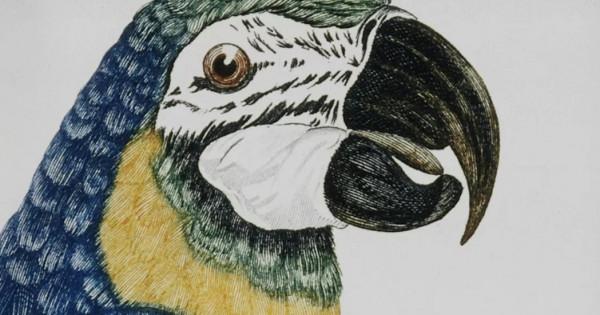 Ο μεγαλύτερος παπαγάλος που υπήρξε ποτέ στη Γη είχε ύψος 1 μέτρο και ζύγιζε επτά κιλά