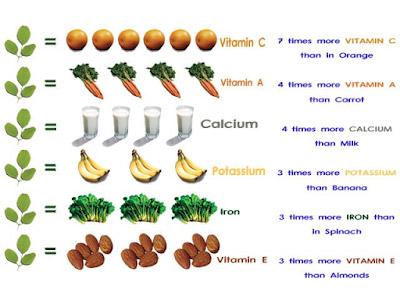 perbandingan gizi daun kelor segar