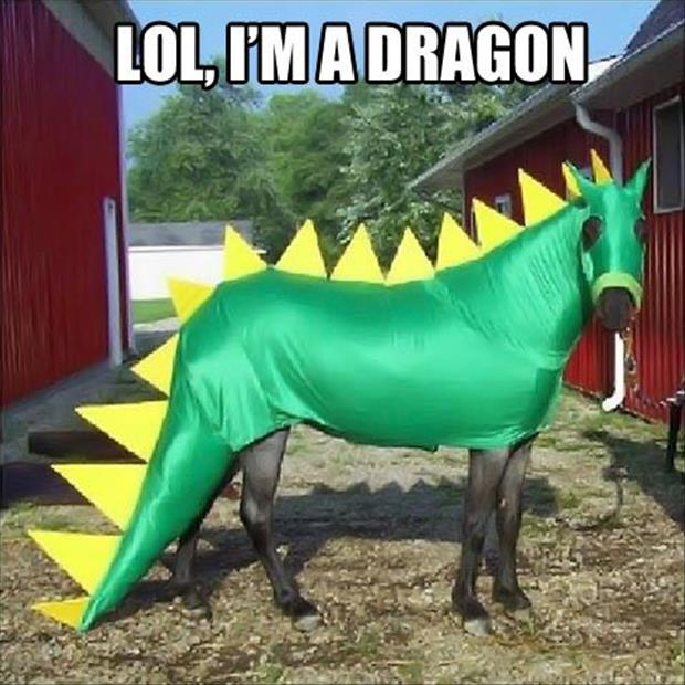 Image result for funny animals in costumes memes