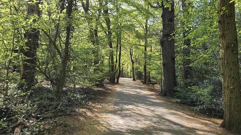 在附近的森林漫步